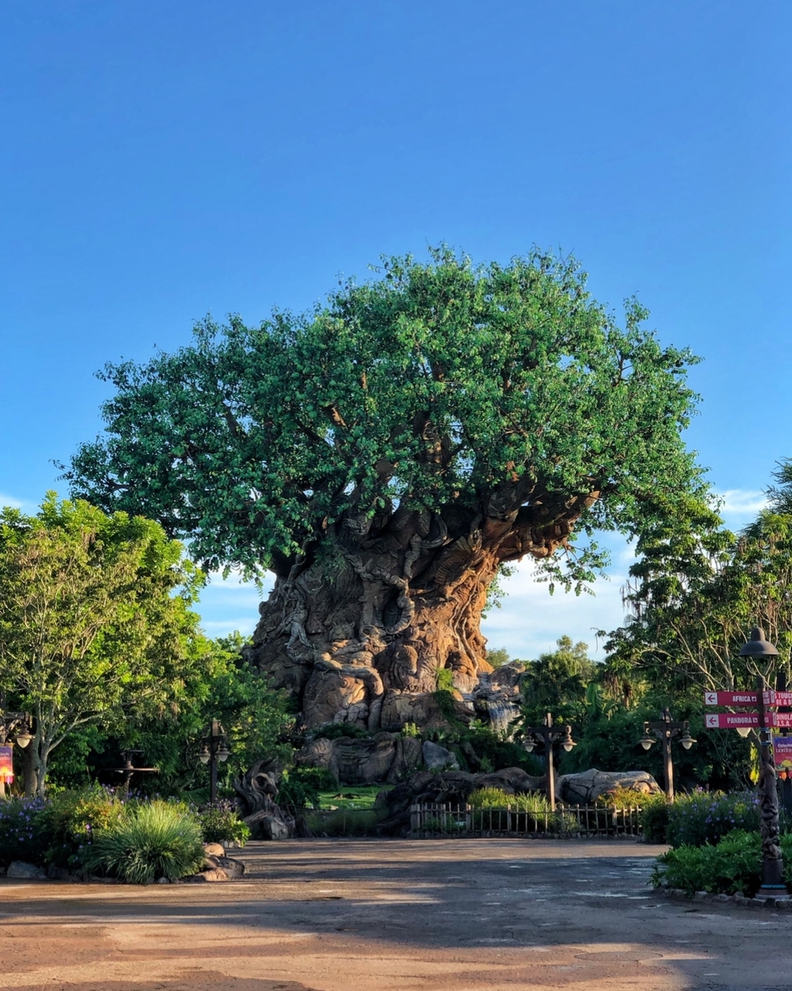 Tree of Life in Disney's Animal Kingdom at Walt Disney World