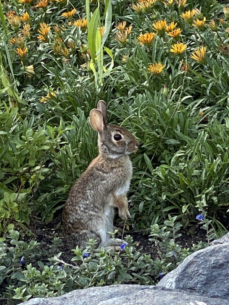 Epcot bunnies Canada pavilion